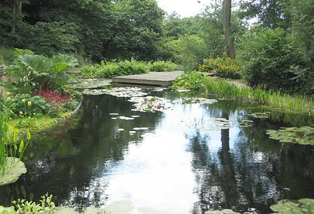 Natural Filtration For Larger Ponds Using Plant Bed Systems